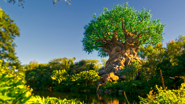 animal-kingdom-gallery22.jpg